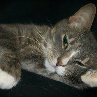 Мой любимый кот Дымок :: Ирина Малышева