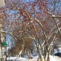 Зима в городе :: Алена