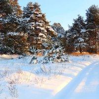 Зима Царица - ты прекрасна! :: Павлова Татьяна Павлова