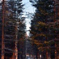 В лесу :: Вероника Изотова
