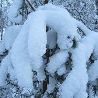 Снежные медведи ) :: Mariya laimite