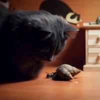 Близкая встреча ...или среди кошек :: Вера Шамраева