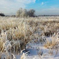 В зимнем наряде :: Александр Никишков