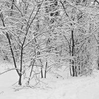 И вот зима.. :: Юрий Стародубцев