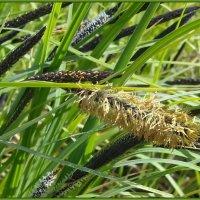 Прибрежные травы :: lady v.ekaterina