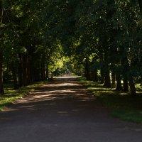Ораниенбаум. В парке :: Ирина Шурлапова