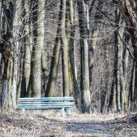 Место,где пишутся стихи :: Yelena LUCHitskaya