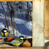 Птички- синички . :: Мила Бовкун