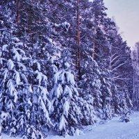 Зимний наряд :: Светлана Игнатьева