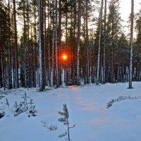 замороженное солнце :: Елена