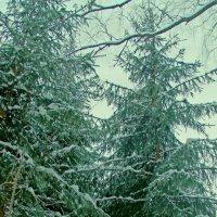 В лесу :: Артем Хххххххххх