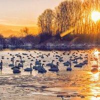 Закат на Лебедином озере :: Галина Шепелева