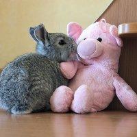 Мягкие игрушки :: И.В.К. ))
