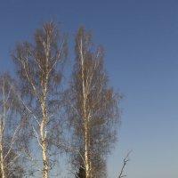 Зимний лес 3 :: Иван .
