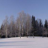 Зимний лес 1 :: Иван .