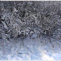 Зима :: Вера