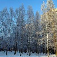 Красавица зима :: Вера