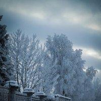 Всему холодно. :: Евгения Кирильченко