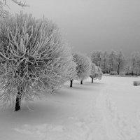 Зима наконец-то :: Alexander Gurkin