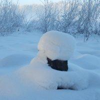 И даже пень в морозный день, нарядом зимним удивляет) :: Владимир Звягин