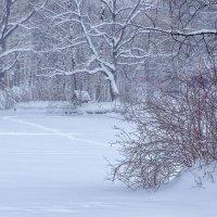 Зимний пейзаж. Фото 2. :: Вячеслав Касаткин