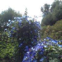 Цветы :: Тамара