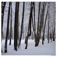 деревья в инее клавиш моего рояля продлили строй... :: sv.kaschuk