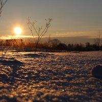 Зимний закат :: Мария Алейникова