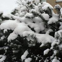 Зима - 2016 :: imants_leopolds žīgurs