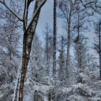 По январским лесам :: sergej-smv