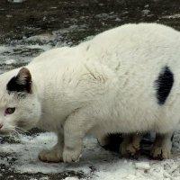 настороженный кот :: Александр Прокудин
