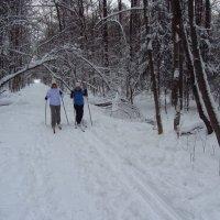 Как бы мы жили без зимы? - Плохо! :: Андрей Лукьянов