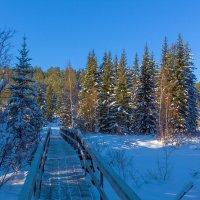 Мост в таёжный край :: Анатолий Иргл