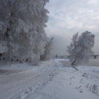 Нарядилися берёзы в праздничный наряд... :: Александр Попов