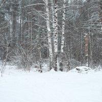 Лес в снегу :: Андрей