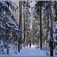 Прогулка по зимнему лесу :: Любовь Чунарёва