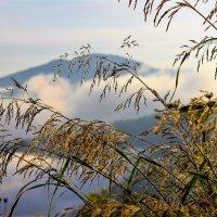 Гнутся травы от росы :: Сергей Чиняев