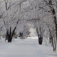 На белых парашютиках спустилась к нам зима... :: Елена Ярова