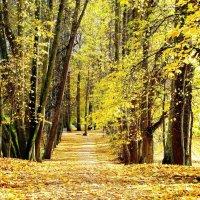 осень золотая :: Нина
