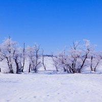 зимнее настроение :: татьяна