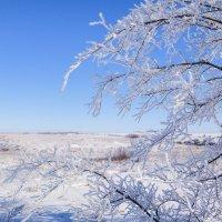 прогулка в зиму :: татьяна