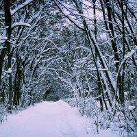 В лесу :: Наталья Нарсеева