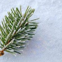 Снежные иголки :: Елена Брыкова