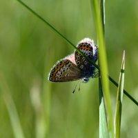 Бабочка :: Геннадий С.