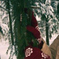 Зима :: Дарья Гречина