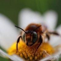 Осенняя пчелка) :: Татьяна Киселева
