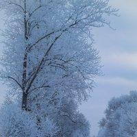 Сказочная лыжня :: Евгения Кирильченко