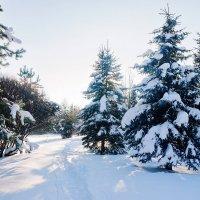 Зима :: Александр Горбачев