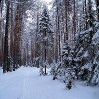Зимний лес :: Наталья Зимирева