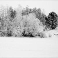 Зимний.... :: Валерия  Полещикова